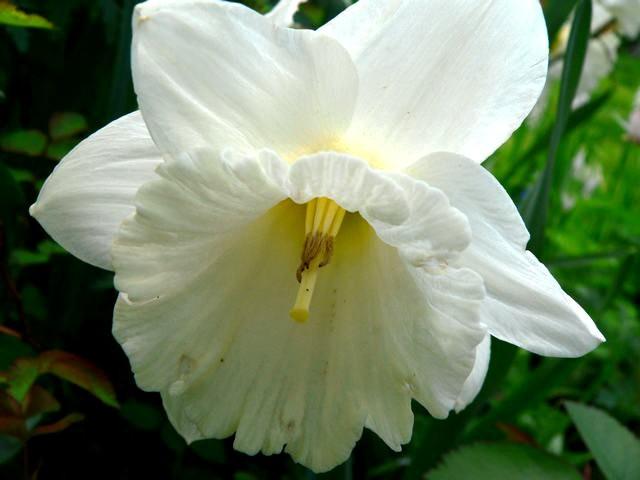 番红花,水仙正盛开_图1-11