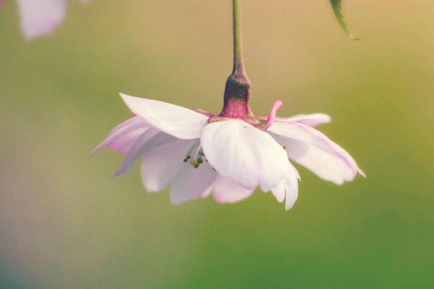 粉红的水嫩的,好看极了_图1-7