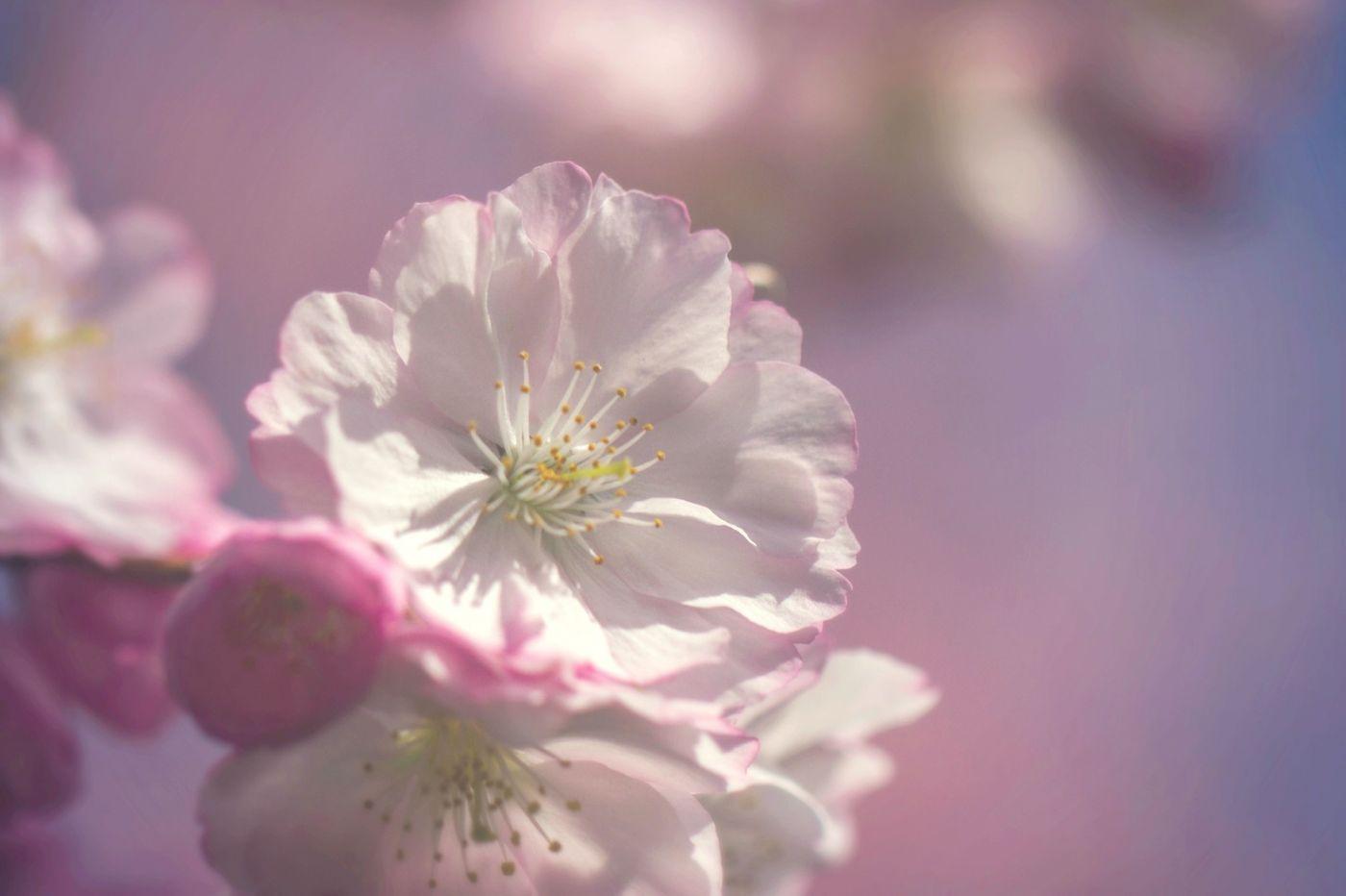 粉红的水嫩的,好看极了_图1-8