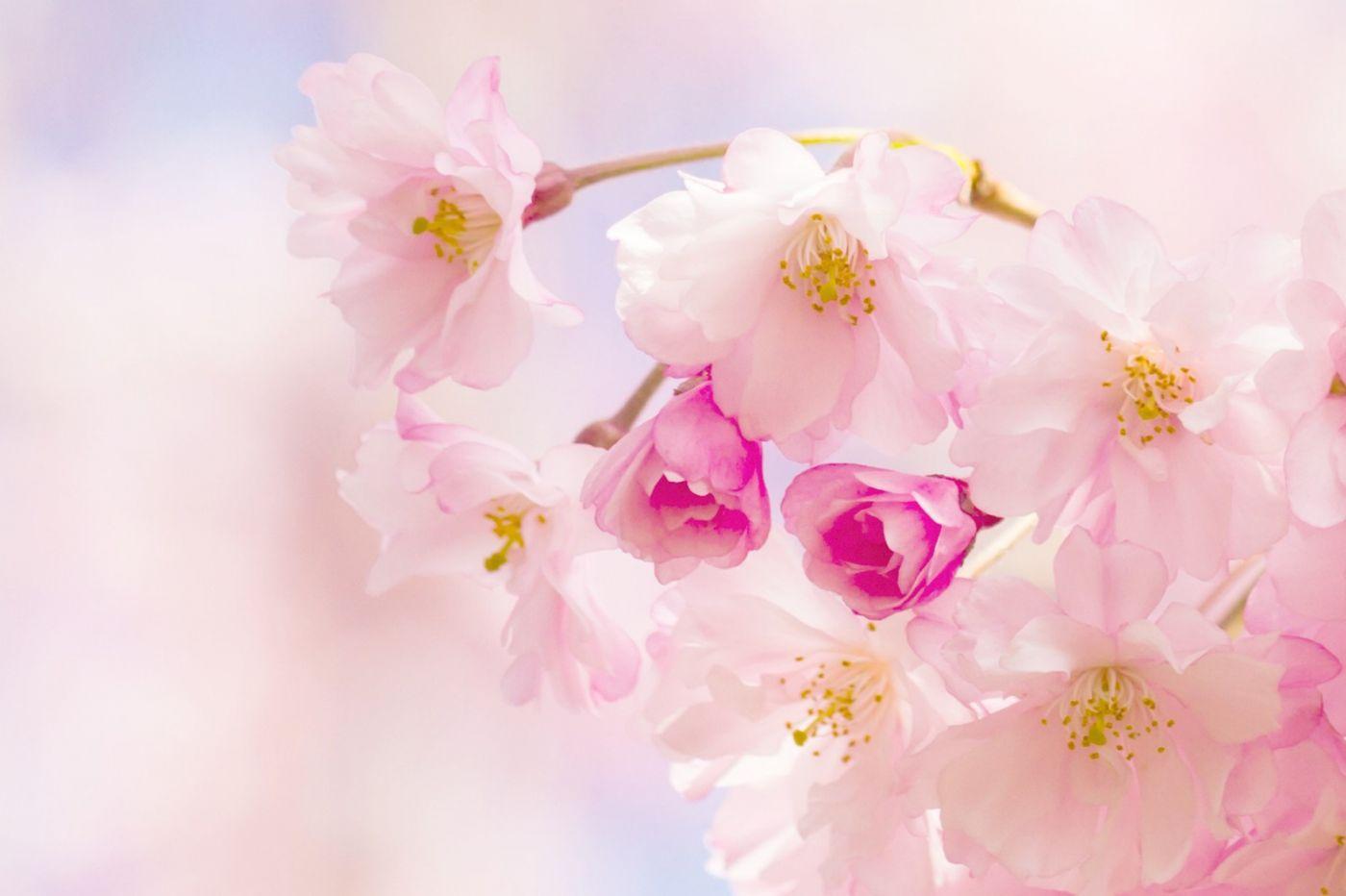 粉红的水嫩的,好看极了_图1-1