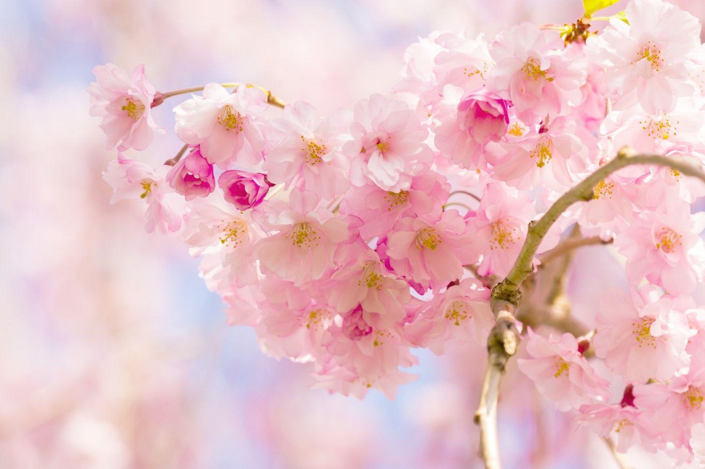 粉红的水嫩的,好看极了_图1-9