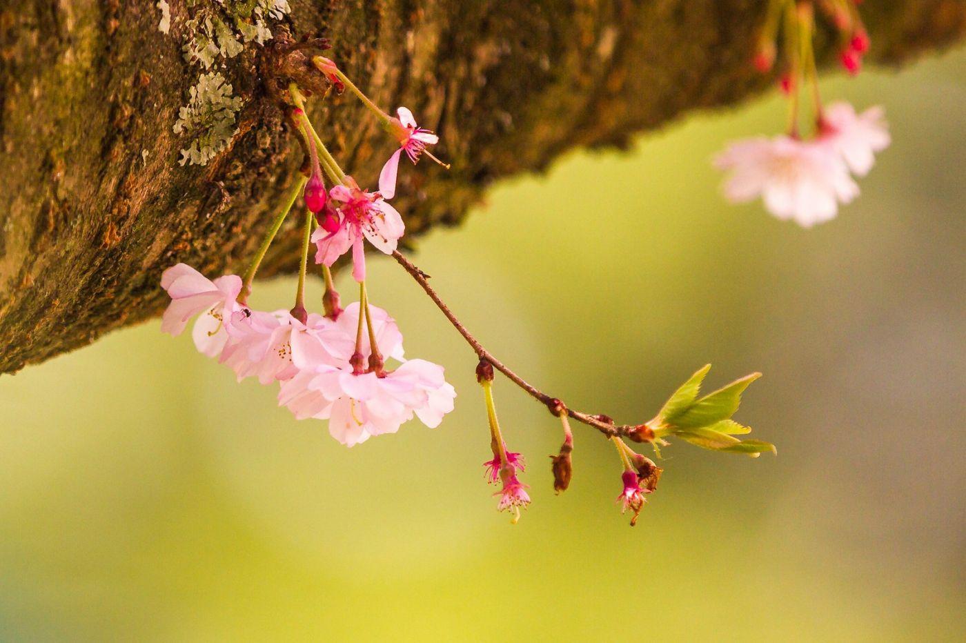 粉红的水嫩的,好看极了_图1-4