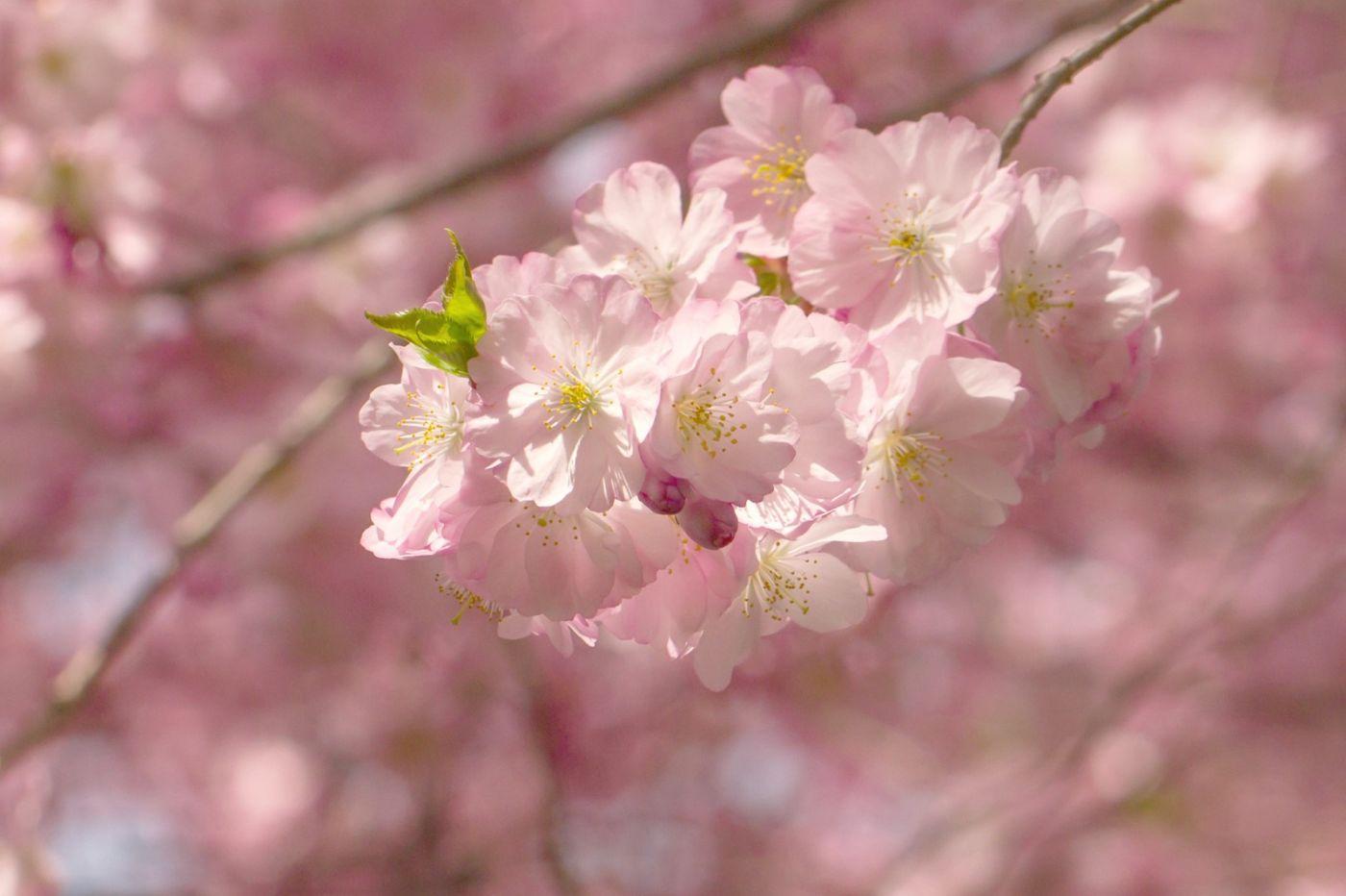 粉红的水嫩的,好看极了_图1-3