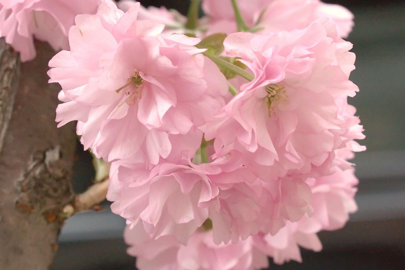粉红的水嫩的,好看极了_图1-10