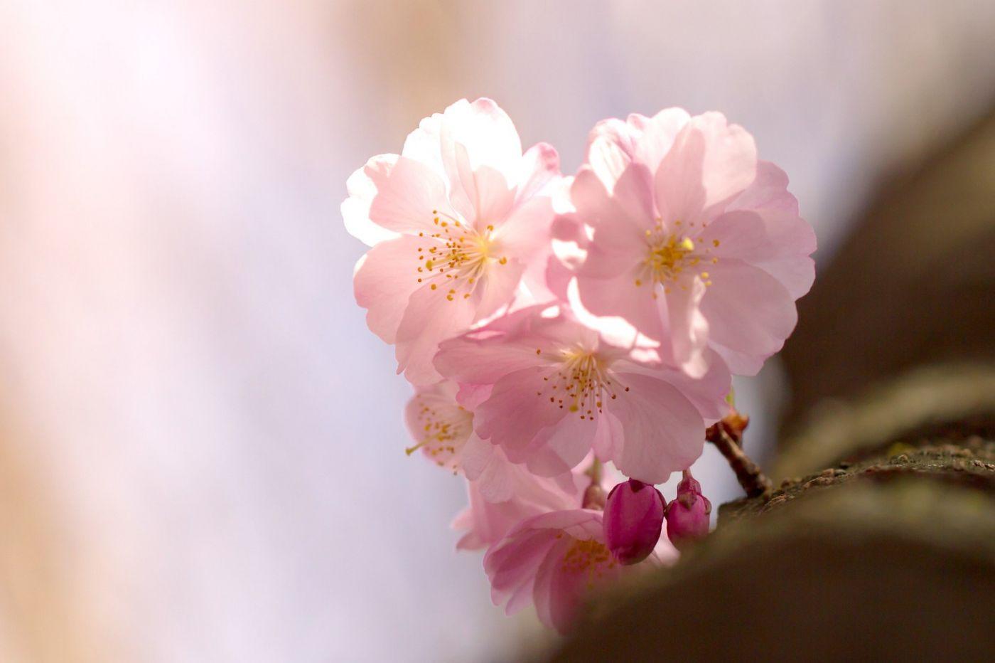 粉红的水嫩的,好看极了_图1-12