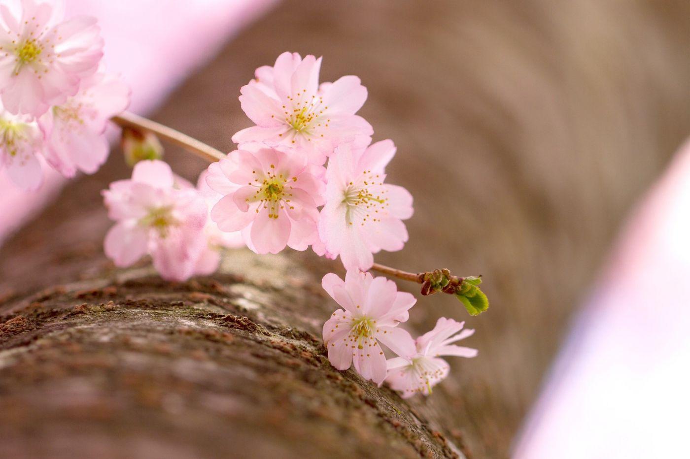 粉红的水嫩的,好看极了_图1-16