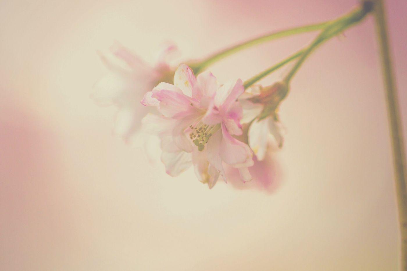 粉红的水嫩的,好看极了_图1-15