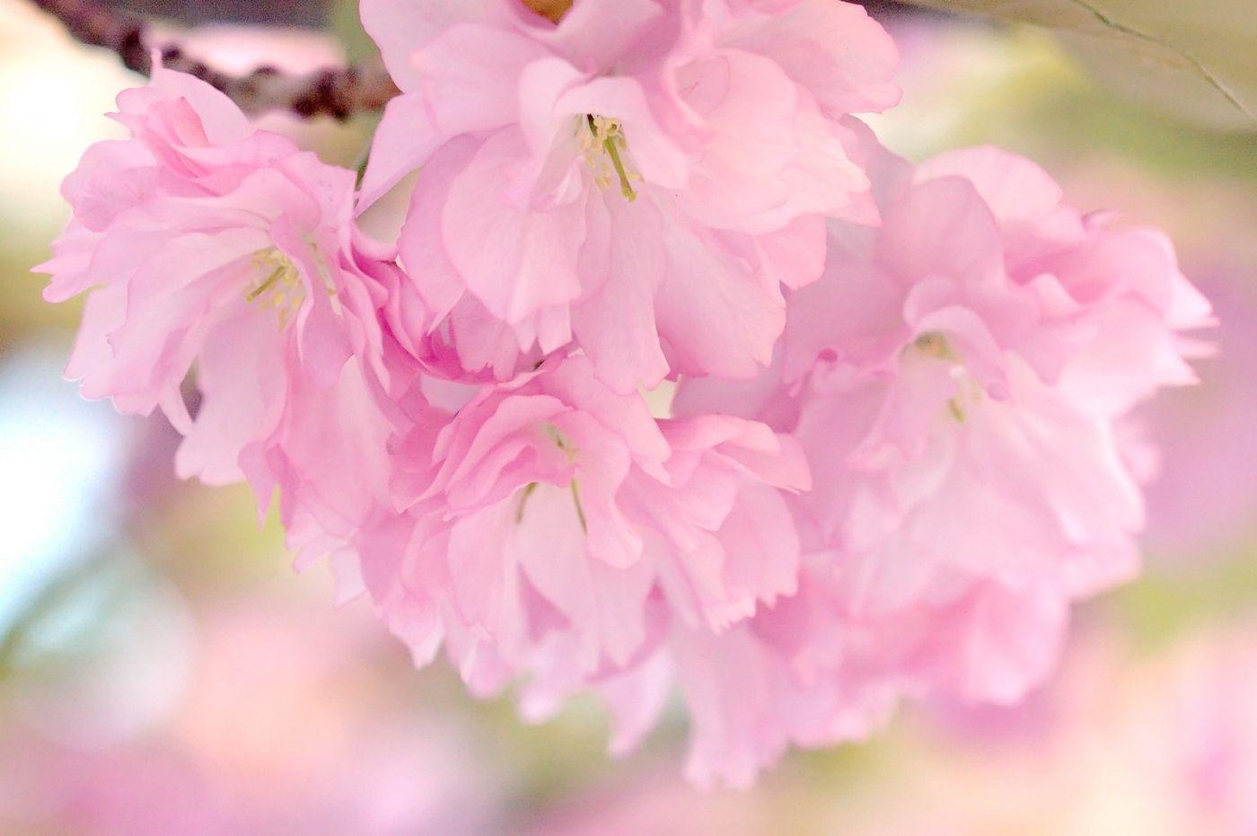 粉红的水嫩的,好看极了_图1-14