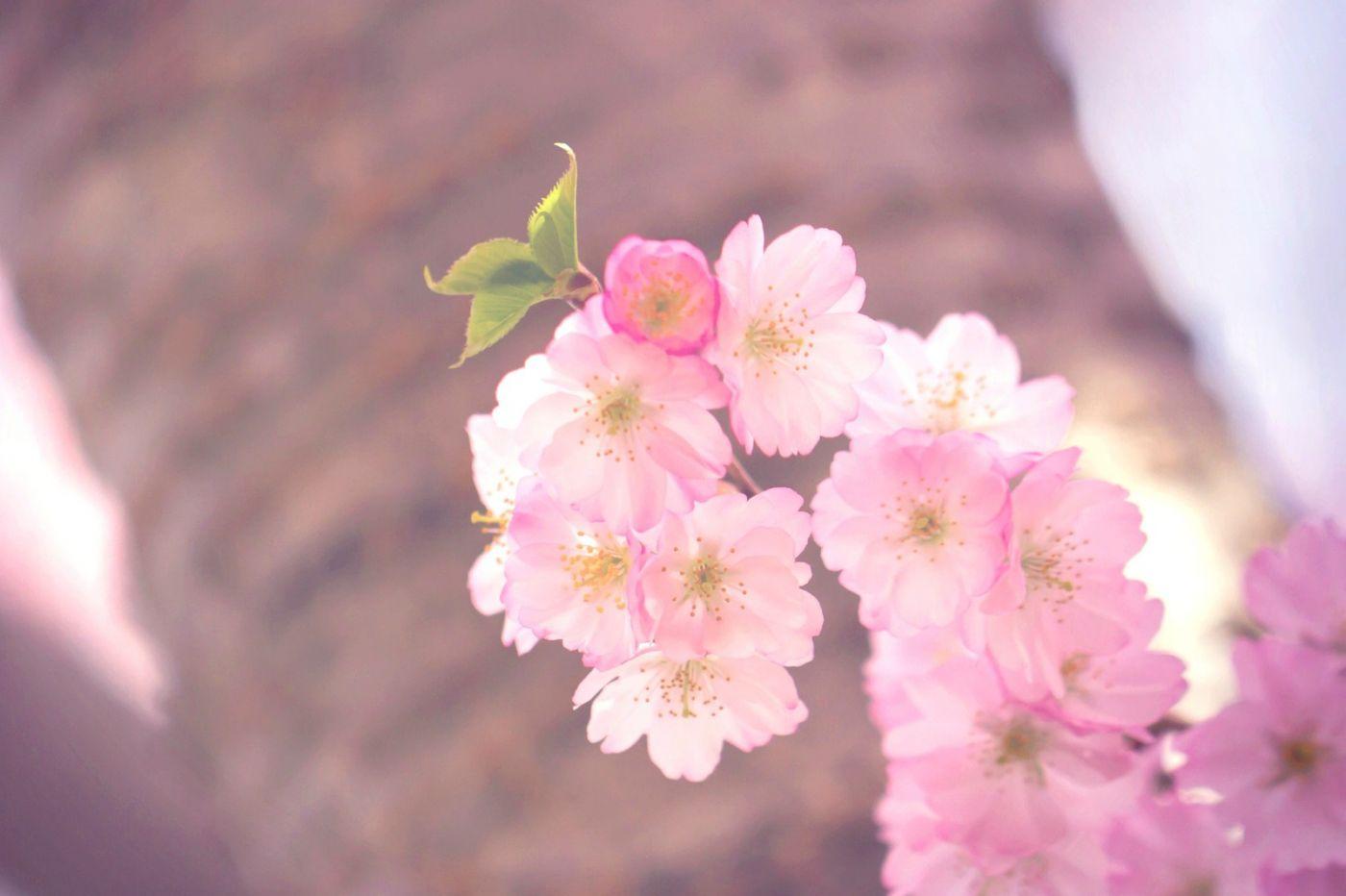 粉红的水嫩的,好看极了_图1-18