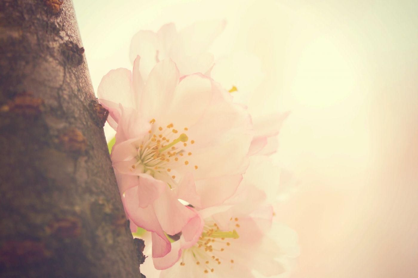粉红的水嫩的,好看极了_图1-24