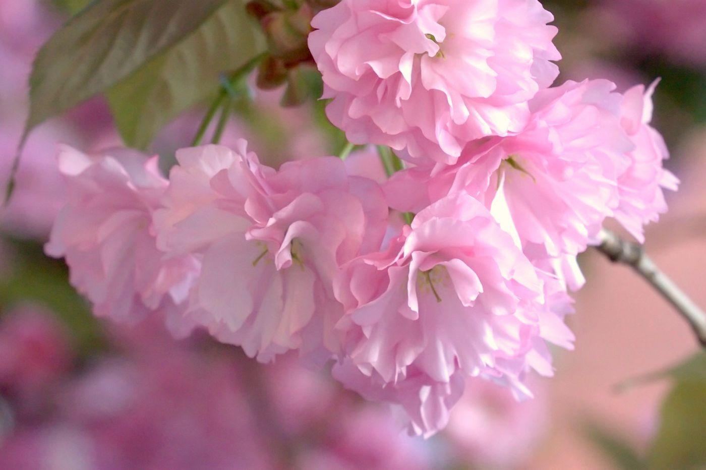 粉红的水嫩的,好看极了_图1-22