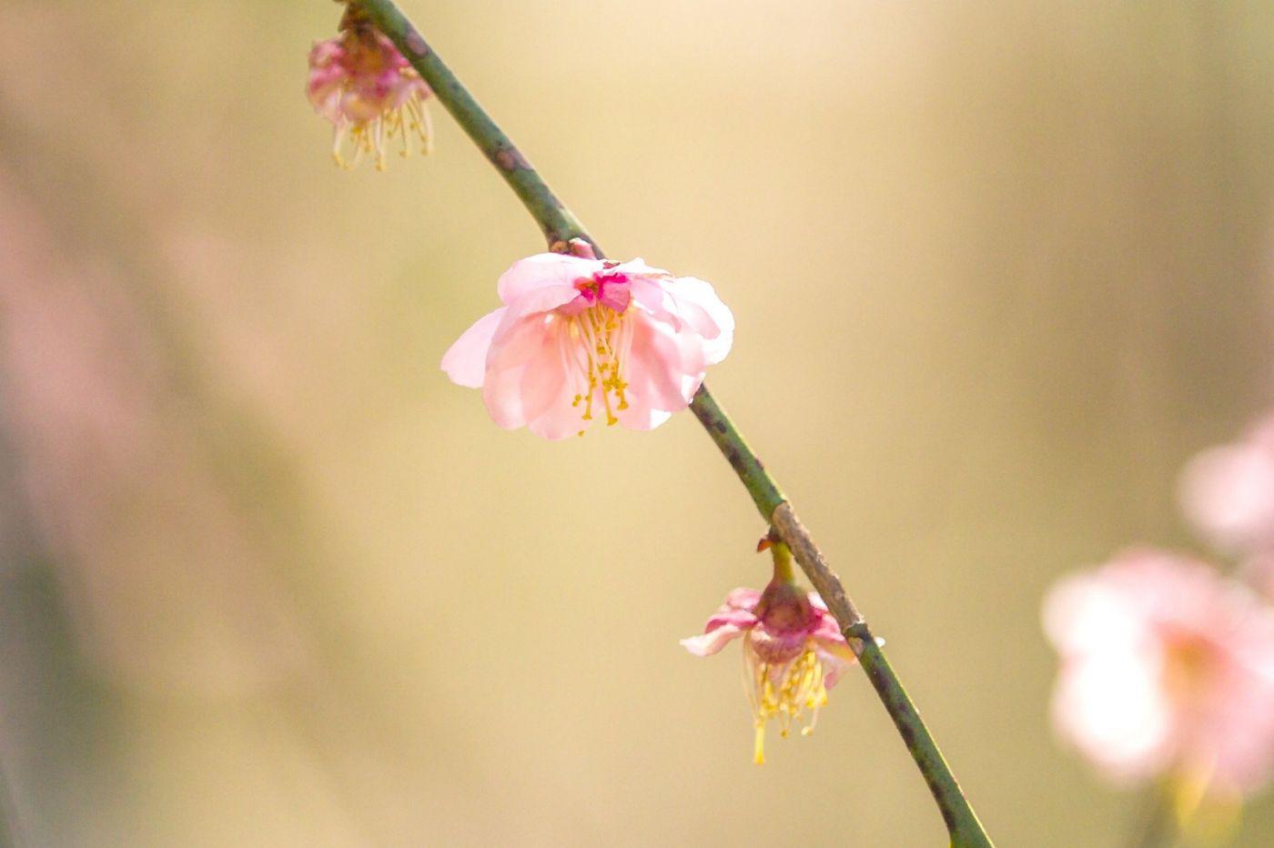 粉红的水嫩的,好看极了_图1-21