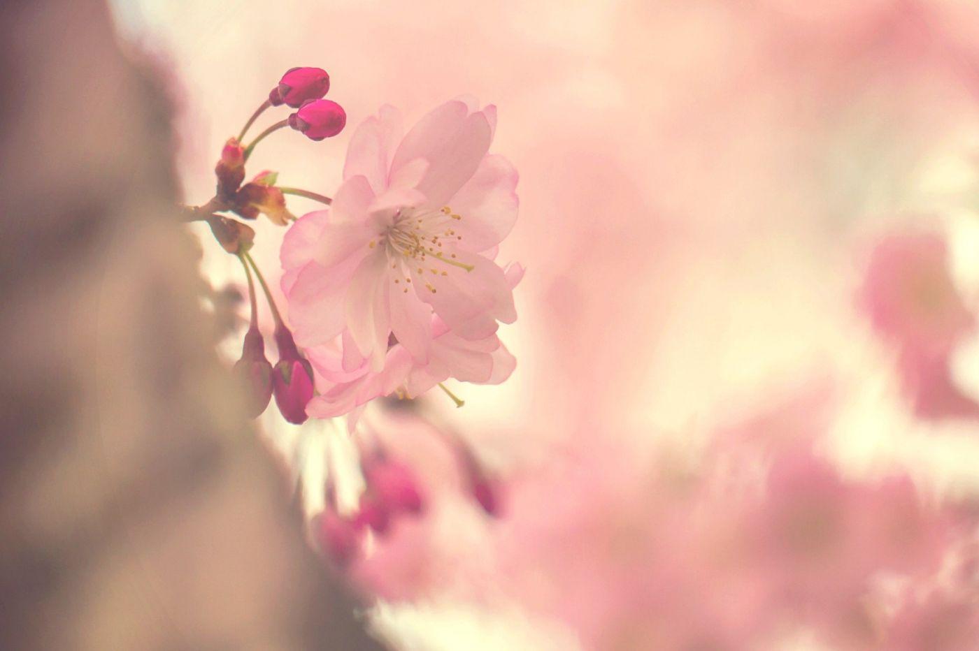 粉红的水嫩的,好看极了_图1-25