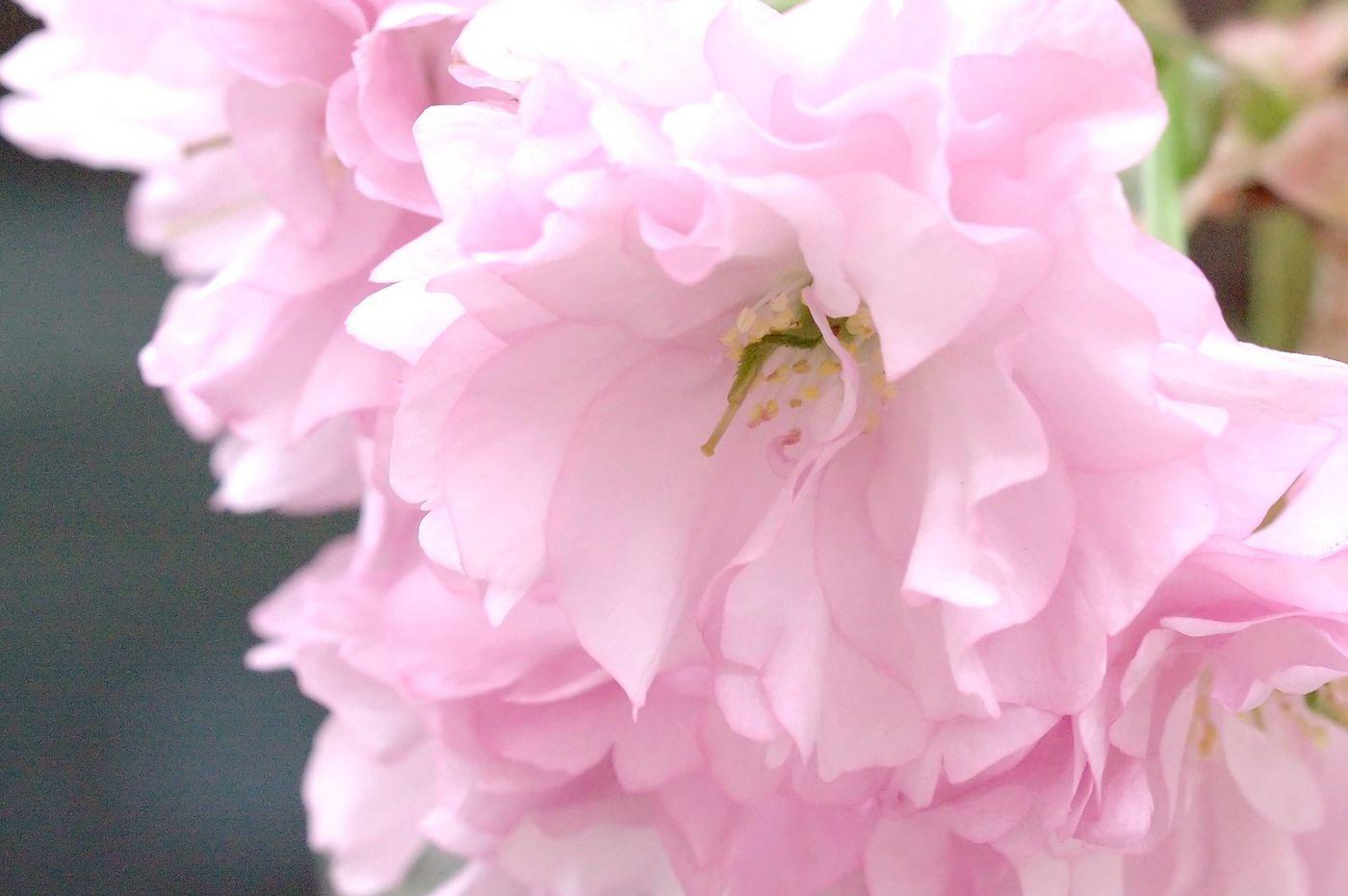 粉红的水嫩的,好看极了_图1-26