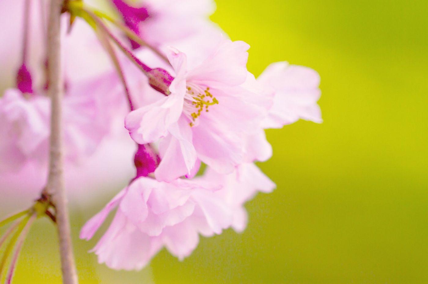 粉红的水嫩的,好看极了_图1-27