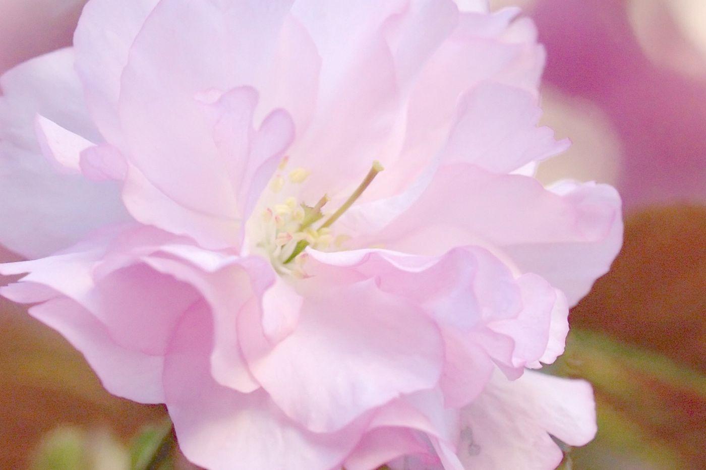 粉红的水嫩的,好看极了_图1-32