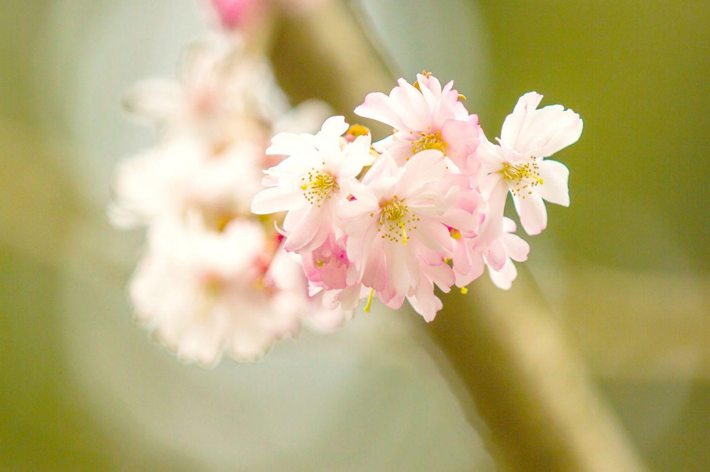 粉红的水嫩的,好看极了_图1-31
