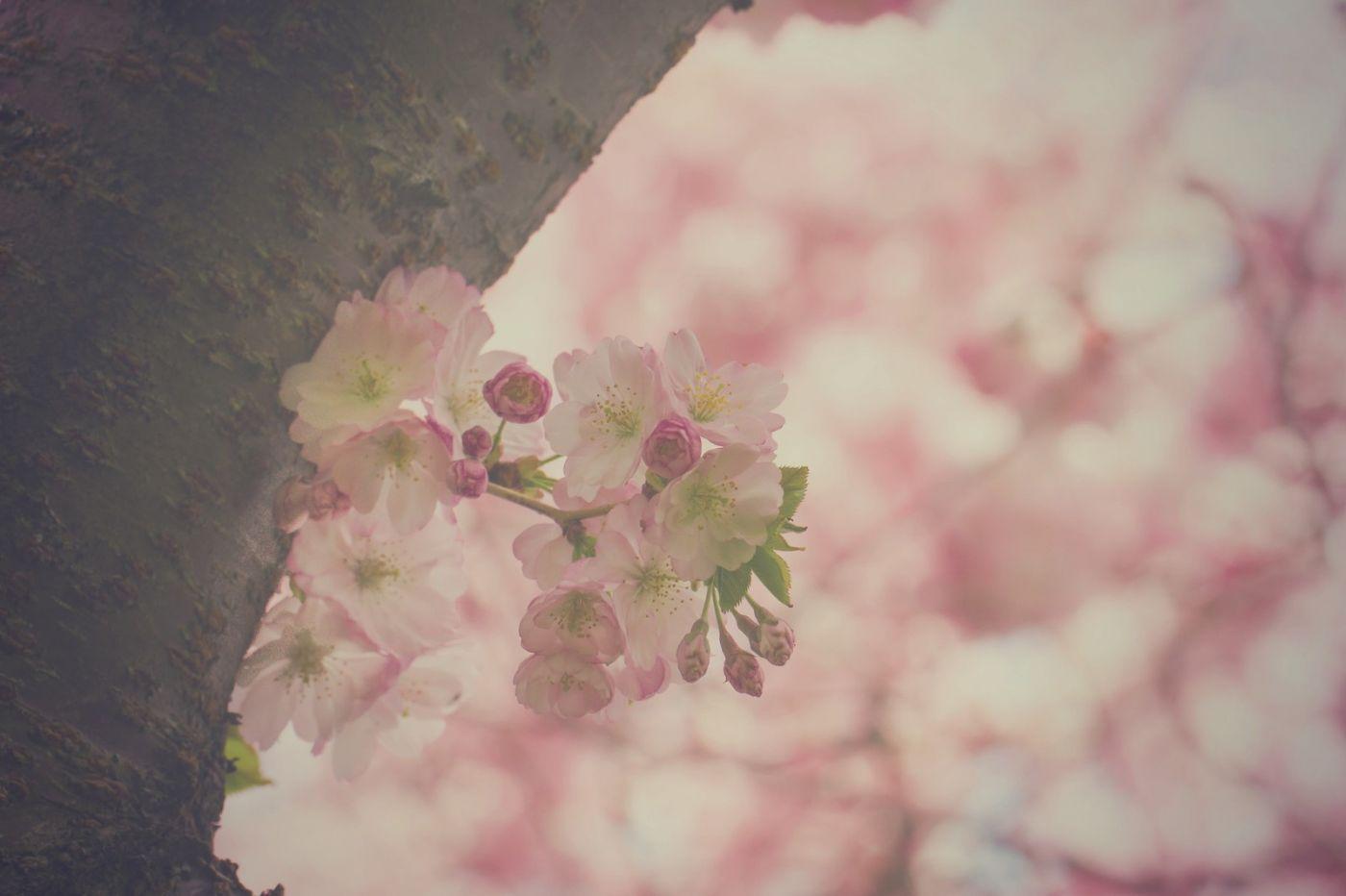 粉红的水嫩的,好看极了_图1-30
