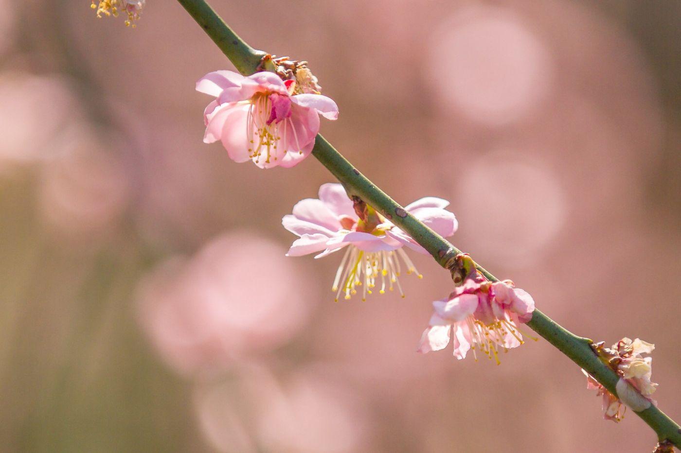 粉红的水嫩的,好看极了_图1-33