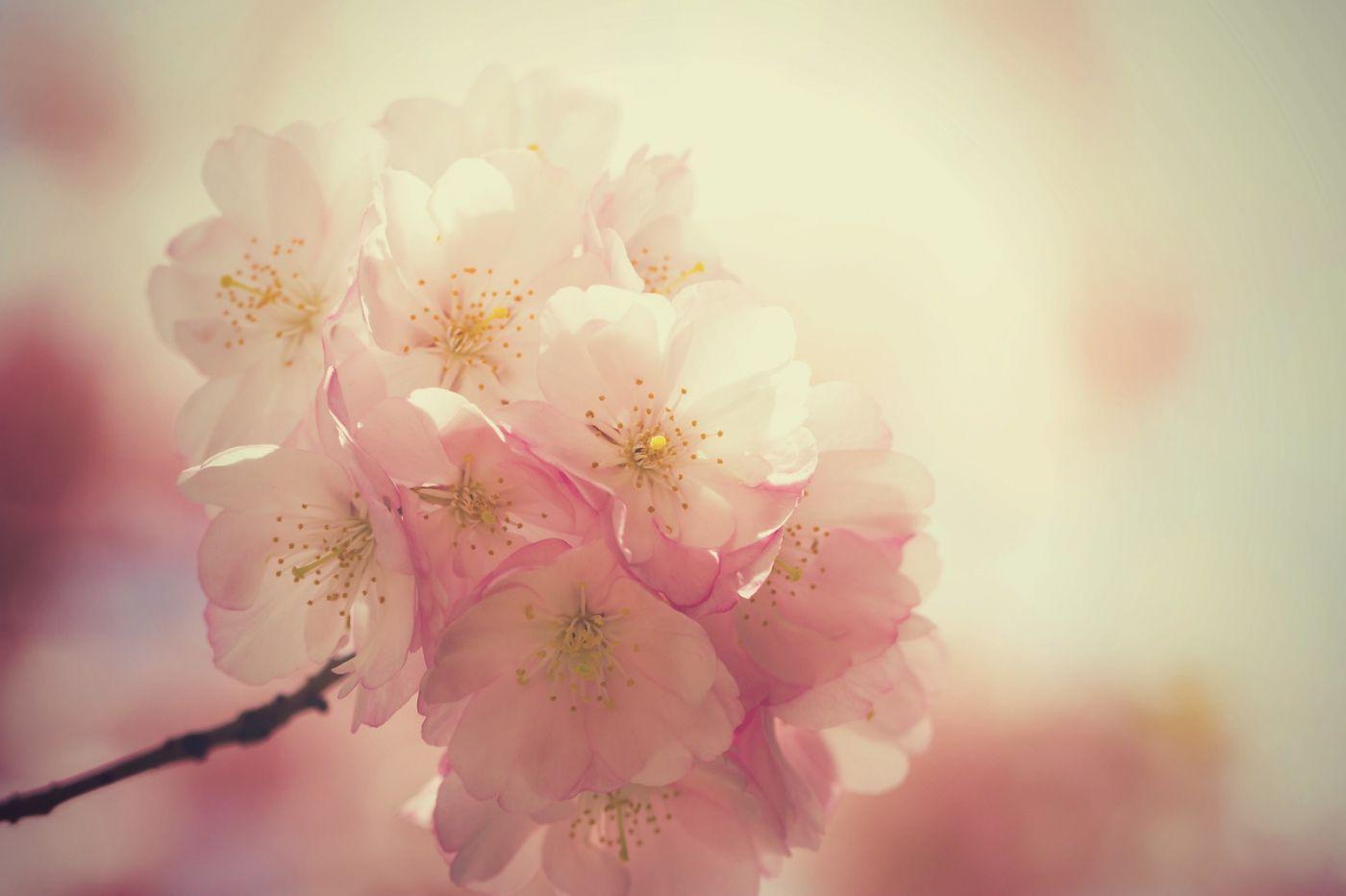 粉红的水嫩的,好看极了_图1-34