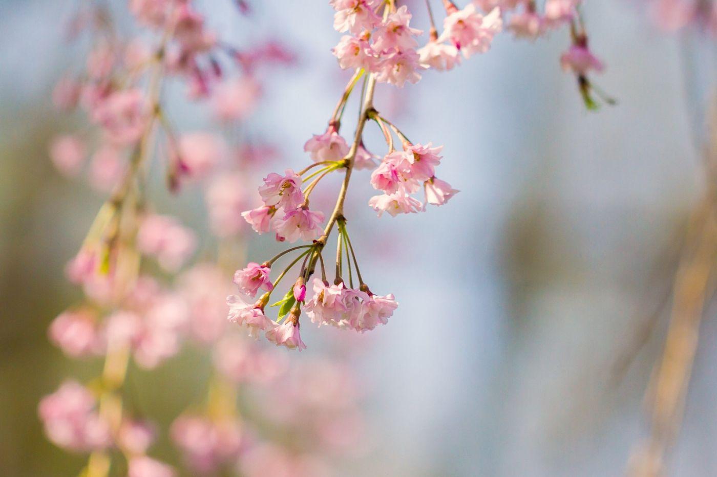 粉红的水嫩的,好看极了_图1-36