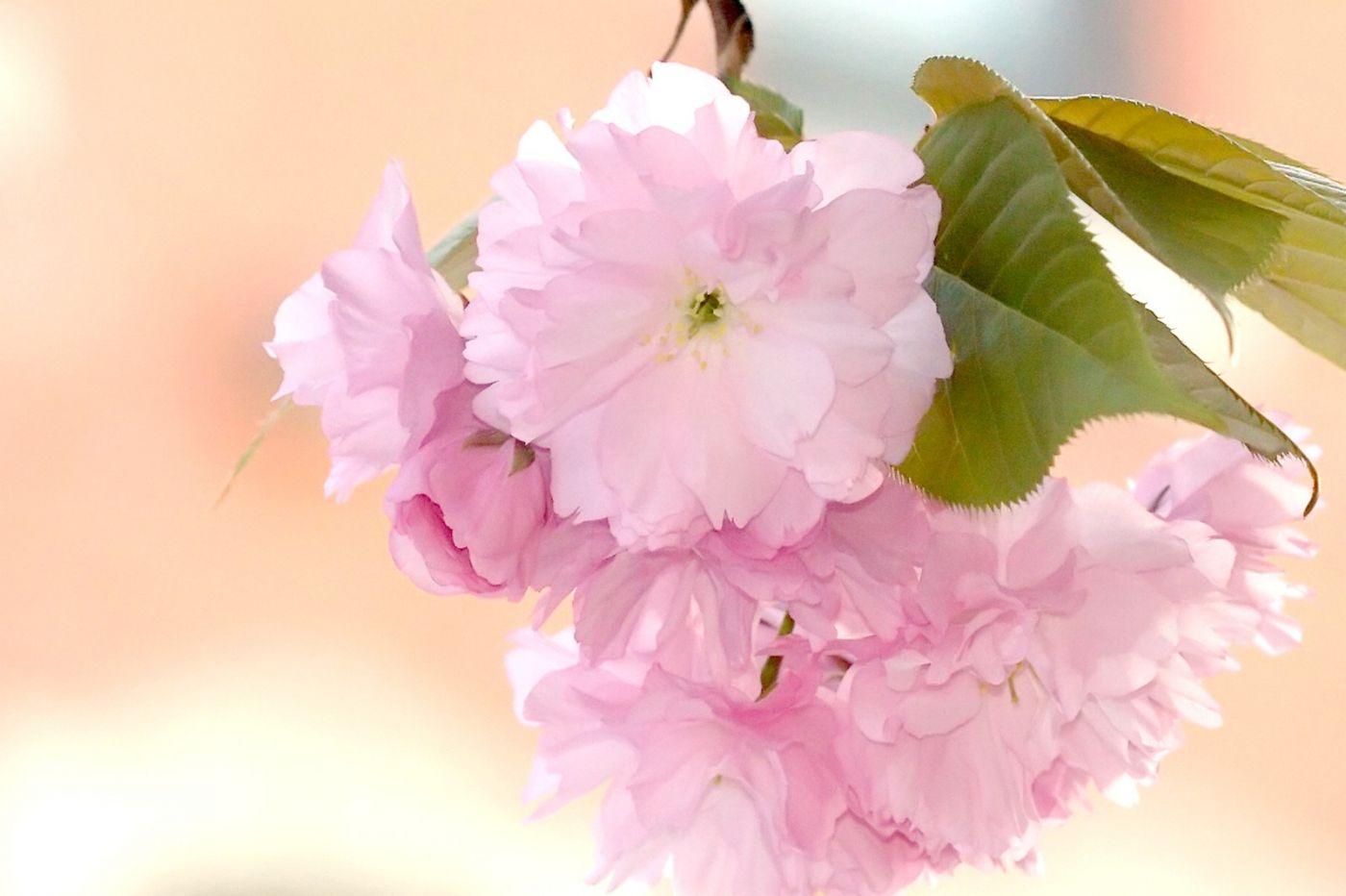 粉红的水嫩的,好看极了_图1-40