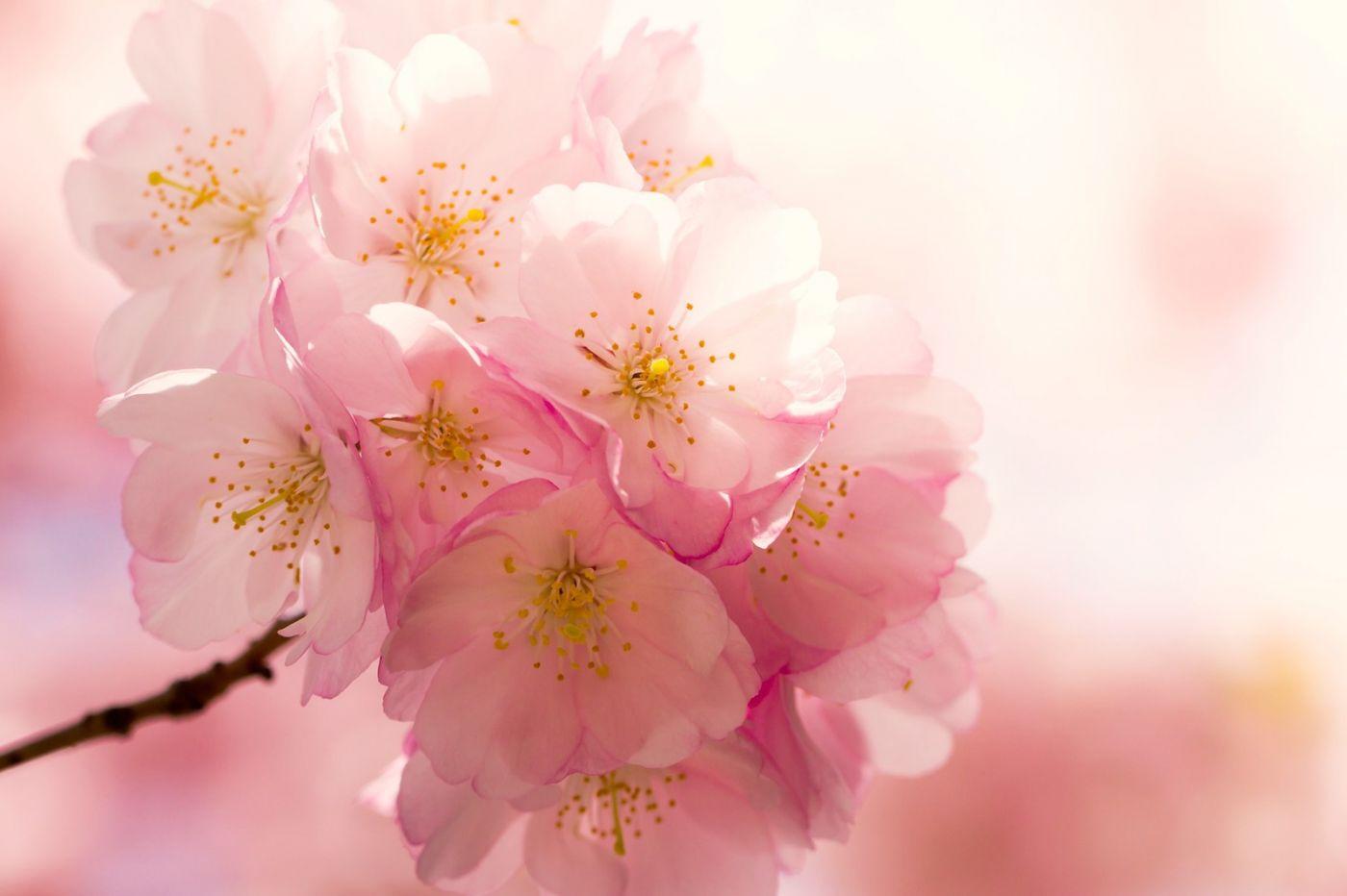 粉红的水嫩的,好看极了_图1-39