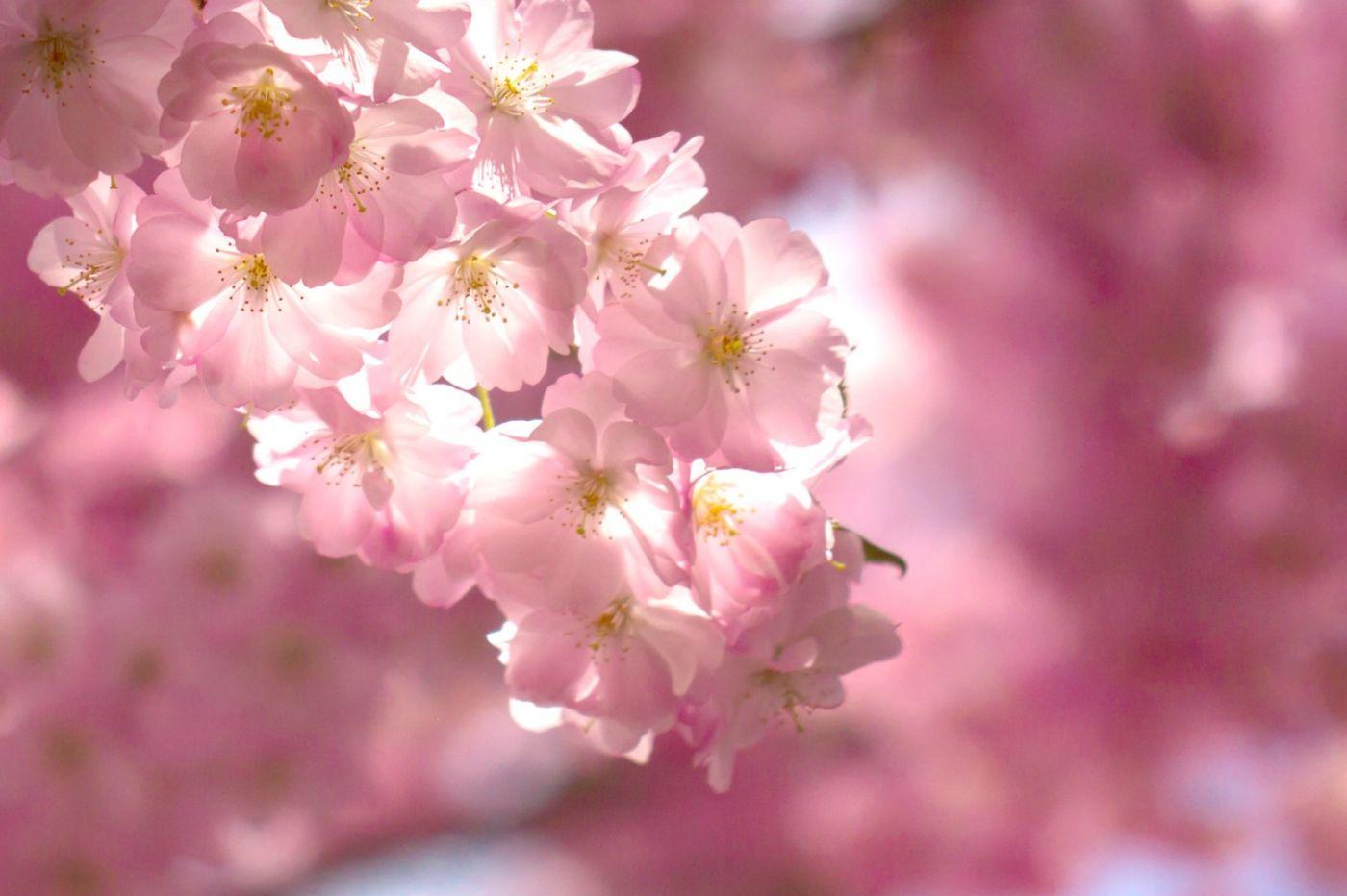 粉红的水嫩的,好看极了_图1-37