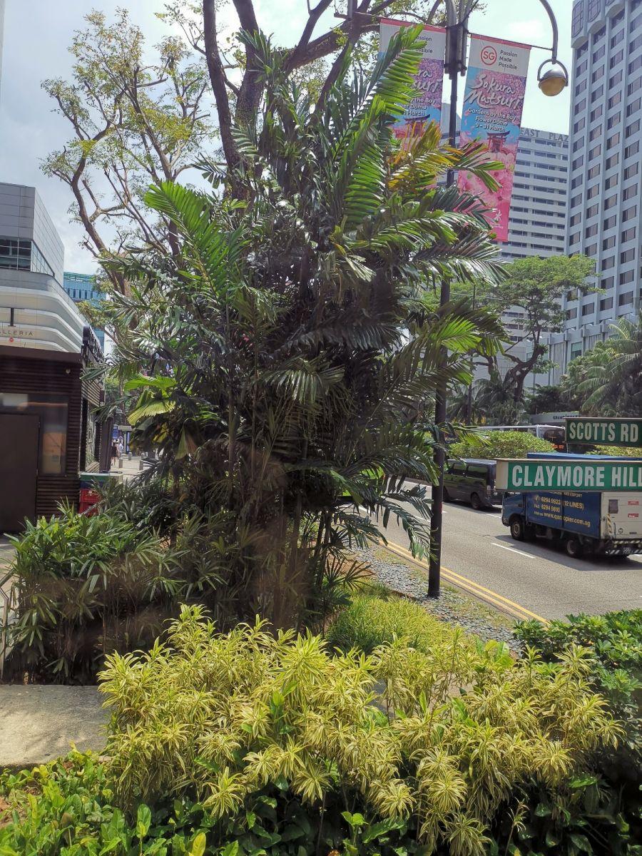 华为手机照片(新加坡、马来西亚)_图1-8