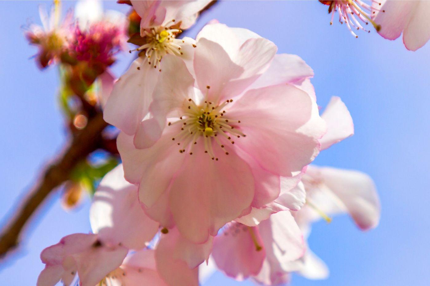春天里百花开_图1-36