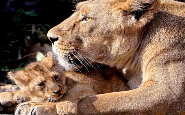爱在动物中_图1-3