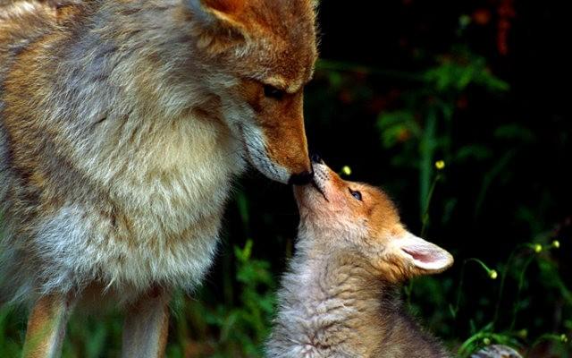 爱在动物中_图1-4