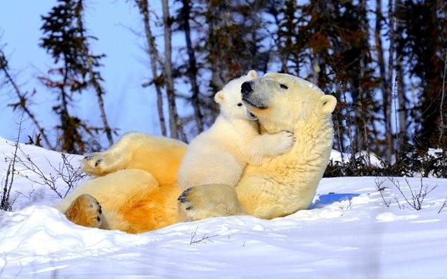 爱在动物中_图1-8