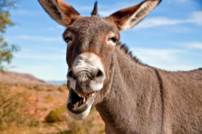 江淳:马和驴的民主对话_图1-1