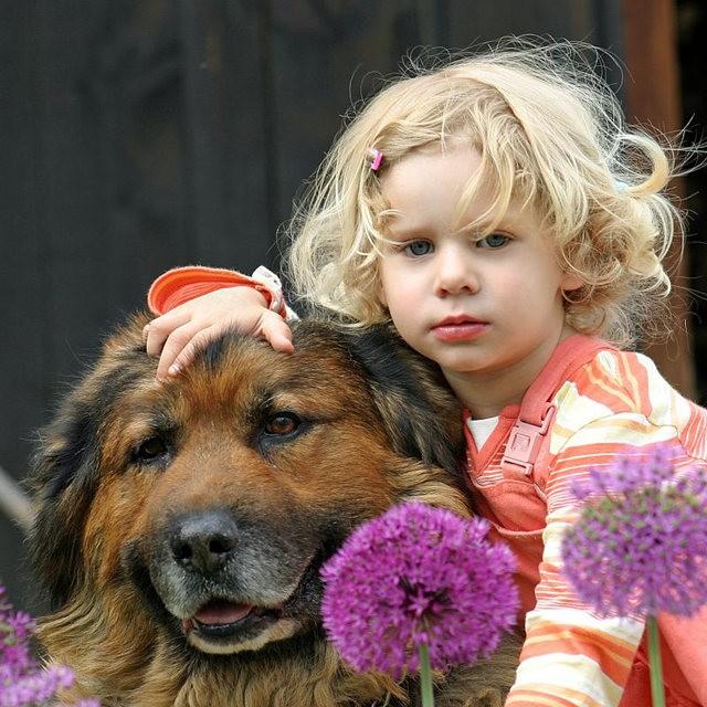狗是地球上唯一爱你胜过爱自己的动物_图1-1