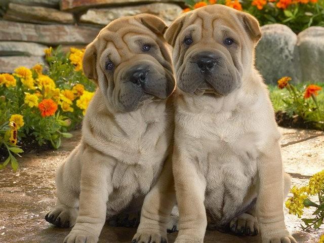 狗是地球上唯一爱你胜过爱自己的动物_图1-2