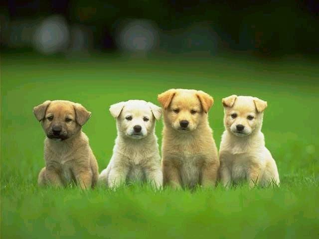狗是地球上唯一爱你胜过爱自己的动物_图1-3