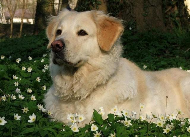狗是地球上唯一爱你胜过爱自己的动物_图1-5