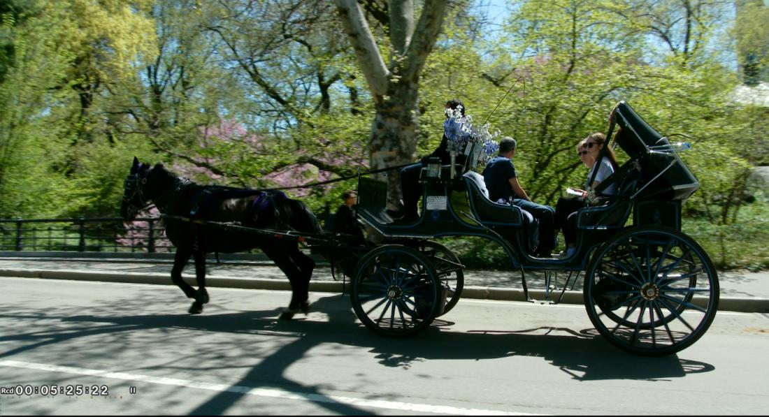 纽约之美--中央公园(Central Park)_图1-6