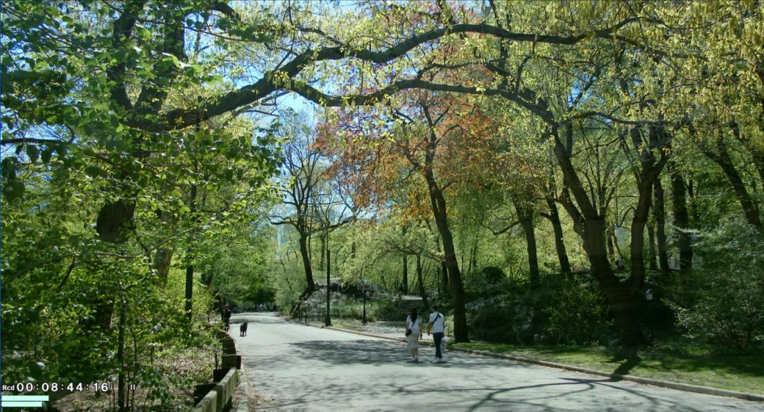 纽约之美--中央公园(Central Park)_图1-11