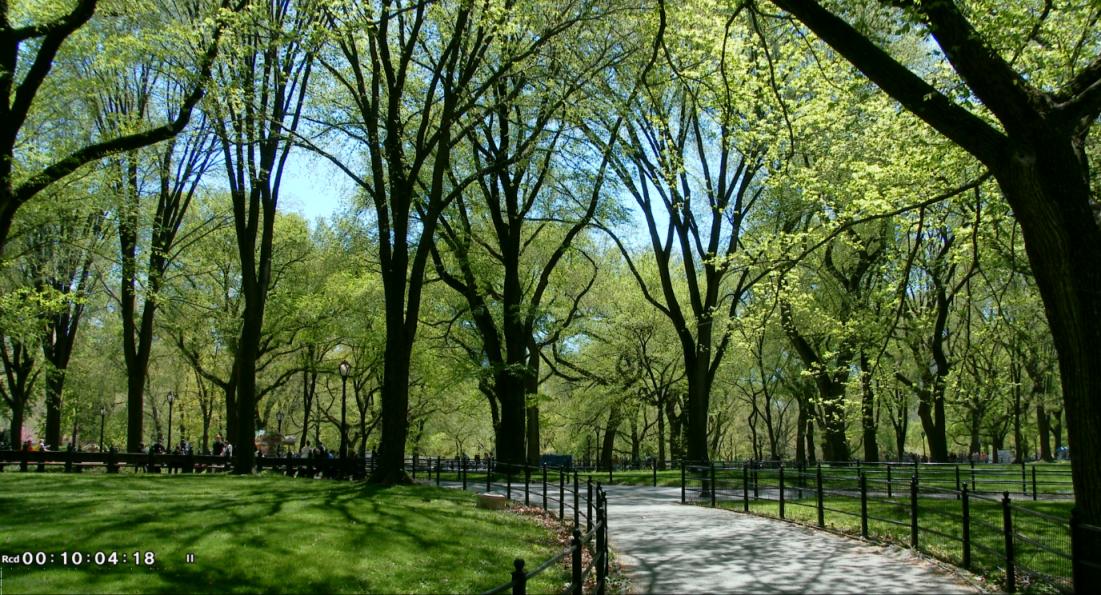 纽约之美--中央公园(Central Park)_图1-14