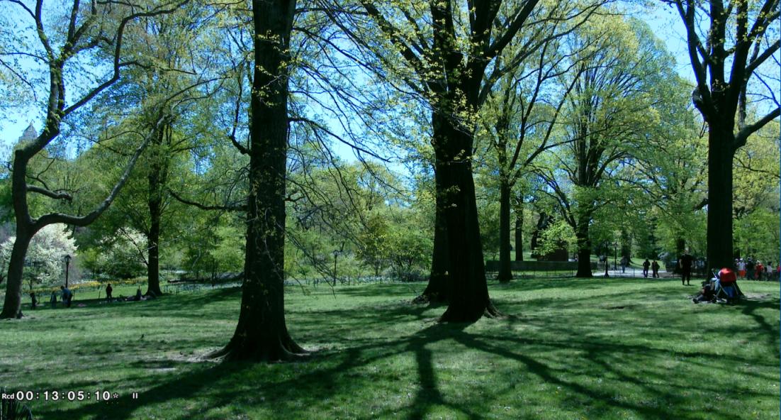 纽约之美--中央公园(Central Park)_图1-17