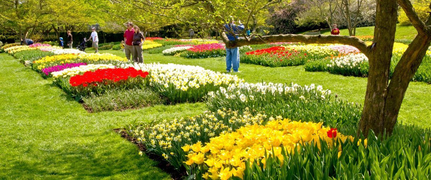 宾州长木公园,缤纷亮丽的郁金香_图1-38