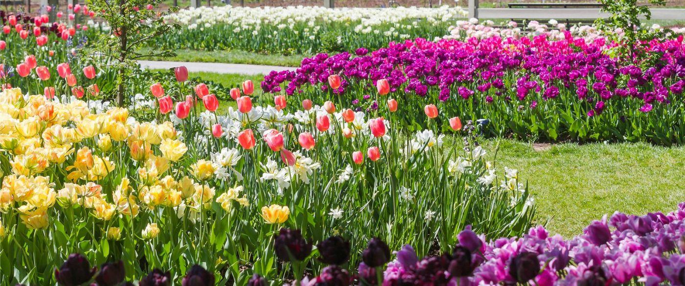 宾州长木公园,缤纷亮丽的郁金香_图1-34