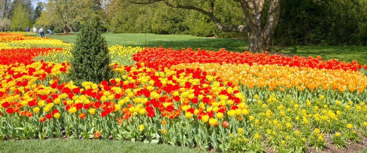 宾州长木公园,缤纷亮丽的郁金香_图1-35