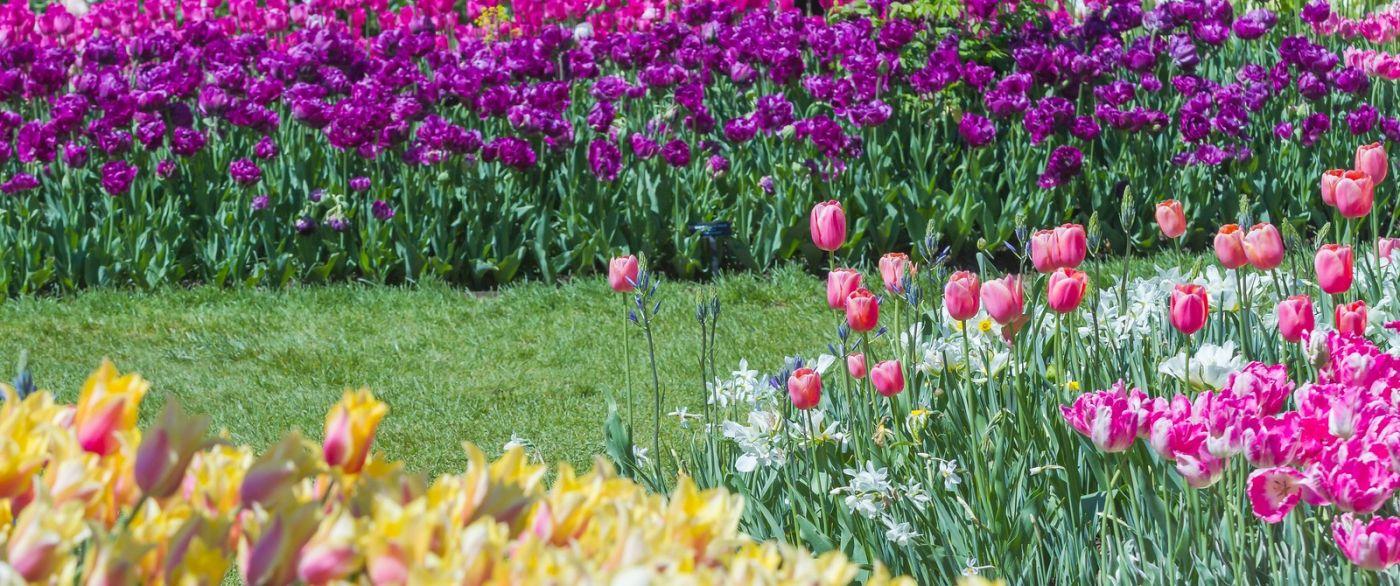 宾州长木公园,缤纷亮丽的郁金香_图1-29