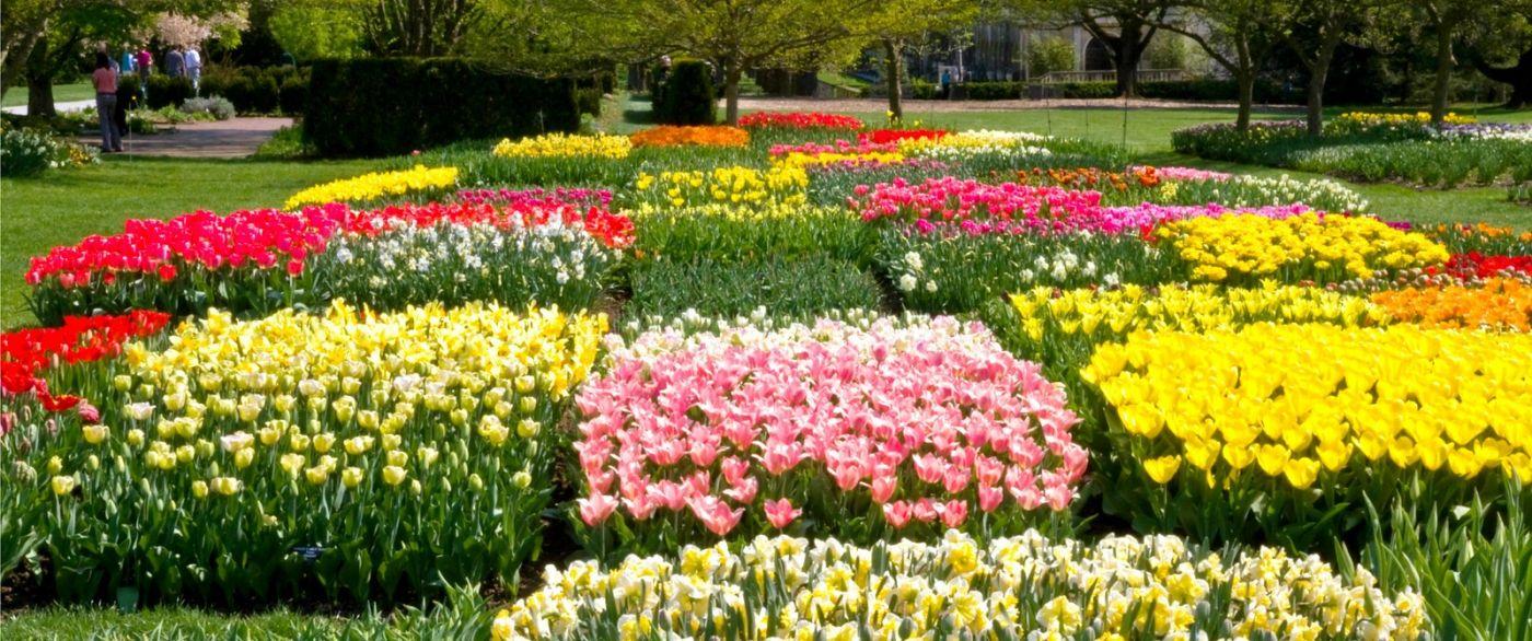 宾州长木公园,缤纷亮丽的郁金香_图1-22