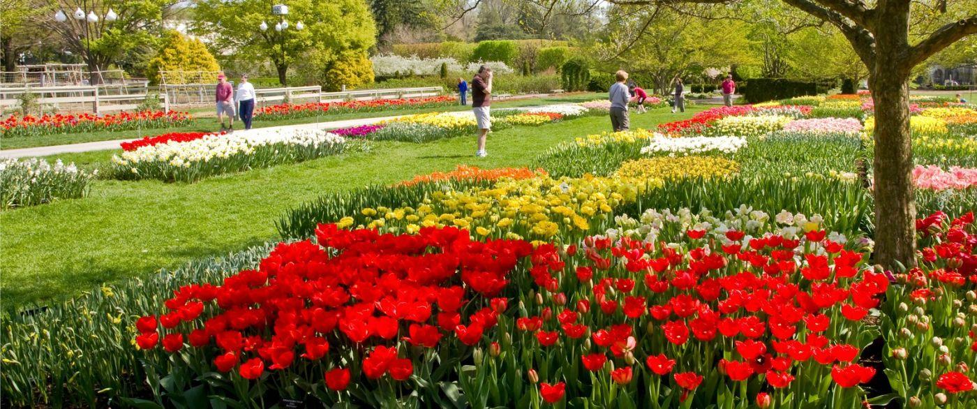 宾州长木公园,缤纷亮丽的郁金香_图1-17