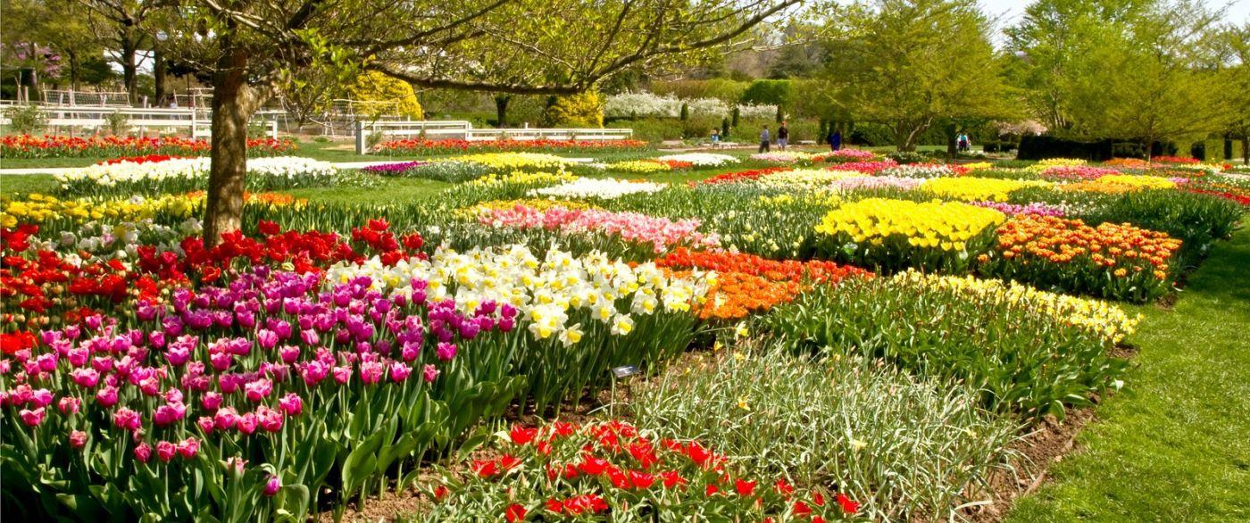宾州长木公园,缤纷亮丽的郁金香_图1-19