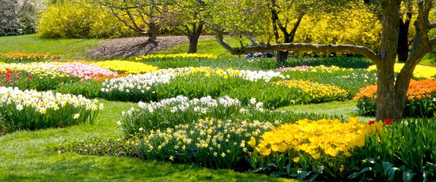 宾州长木公园,缤纷亮丽的郁金香_图1-20